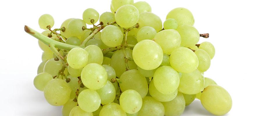 chto takoe vinograd