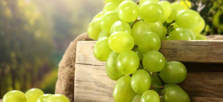 dlya rosta i plodonosheniya vinogradnoj lozy neobhodima selitra
