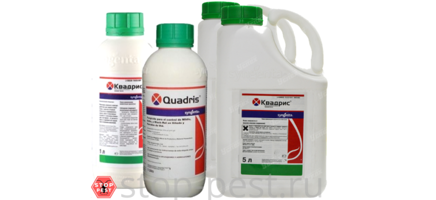 fungicid kvadris podrobnaya instrukciya po primeneniju