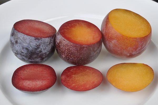 gibrid abrikosa slivy i nektarina