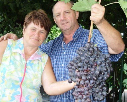 hadzhi murat chto za vinograd
