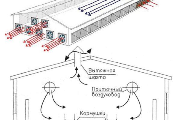 kak organizovat sistemu ventilyacii v svinarnike samostoyatelno
