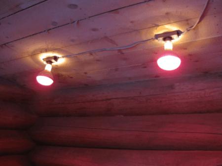obogrev kuryatnika zimoj pri pomoshhi infrakrasnyh lamp