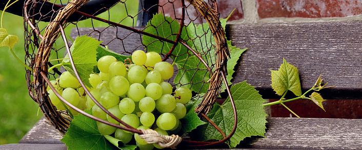 polza i vred vinograda dlya organizma