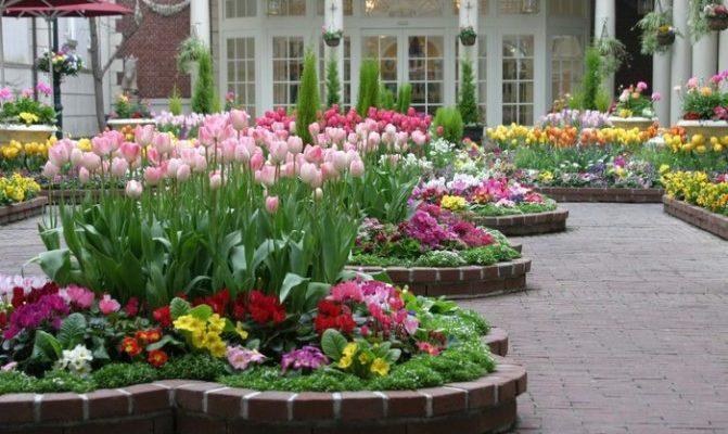 posadka lukovichnyh cvetov bujstvo krasok v sadu i na balkone