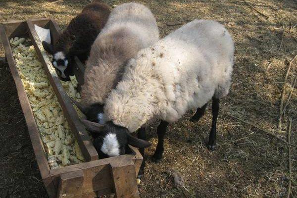 samodelnye kormushki iz podruchnyh materialov dlya ovec