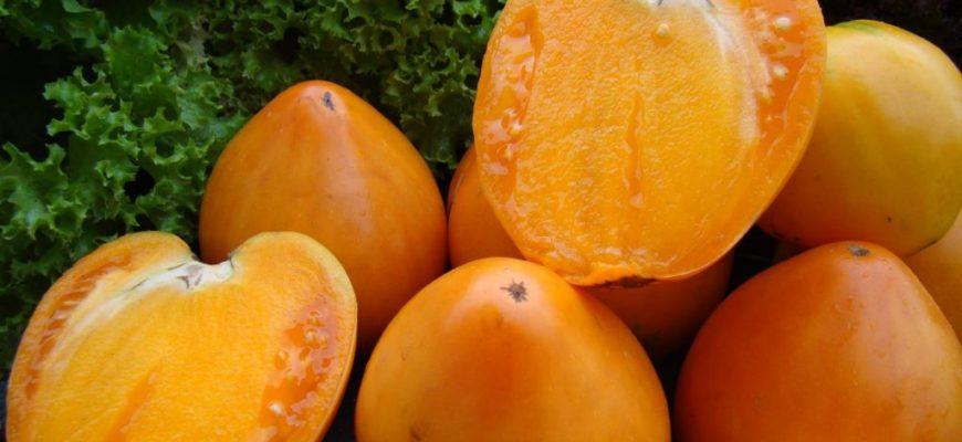 sekrety razvedeniya tomatov hurma