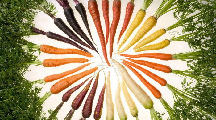 semena morkovi luchshie sorta dlya vashego regiona