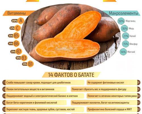 sladkij kartofel polza i vred batata