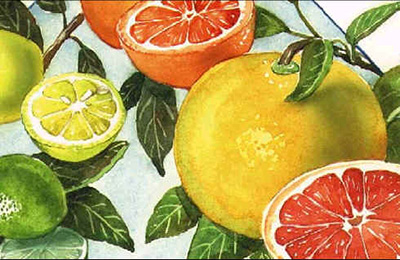 spisok osnovnyh citrusovyh fruktov