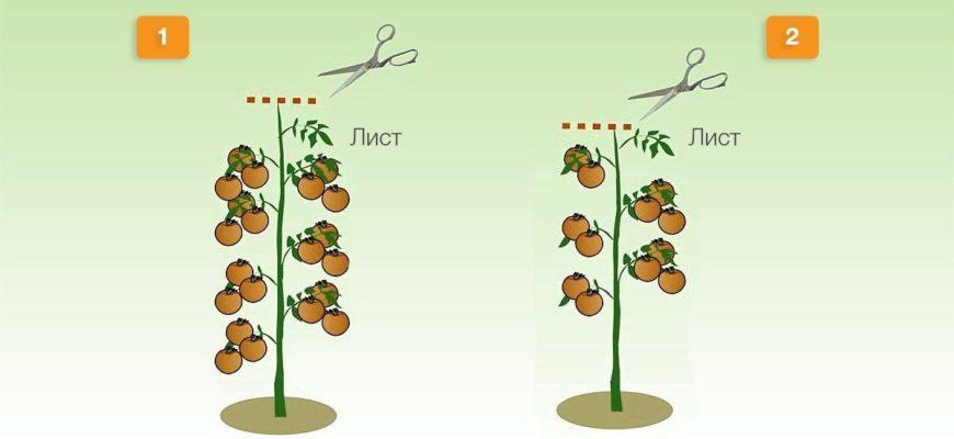 sposoby formirovaniya tomatov