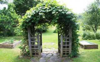 tenistyj ugolok iz vinogradnoj arki