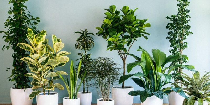 top samyh krasivyh neobychnyh i ekzoticheskih komnatnyh cvetov