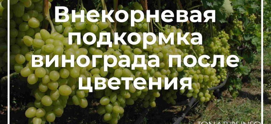 udobrenie vinograda i ego podkormka posle zaversheniya cveteniya