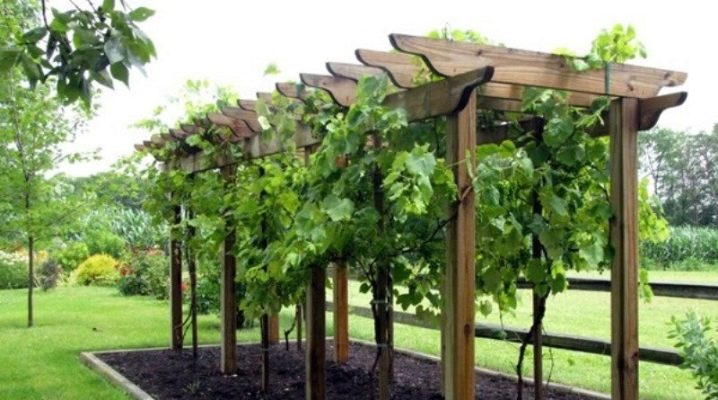 vidy vinogradnyh opor