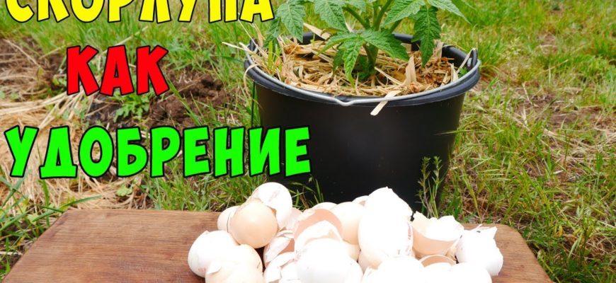 yaichnaya skorlupa unikalnoe udobrenie povyshajushhee plodorodie pochvy