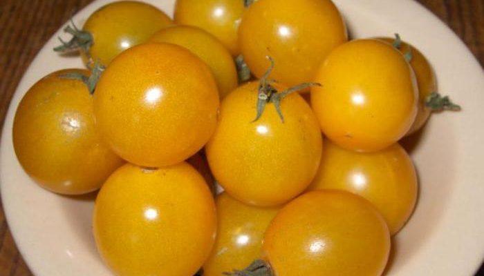 zhjoltye pomidory zapasaemsya vitaminami na zimu